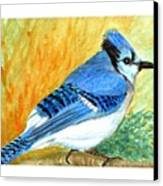 The Blue Jay Canvas Print