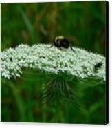 The Bumblebee And The Fly Canvas Print