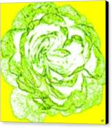 The Cabbage Rose Canvas Print
