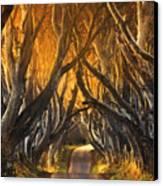 The Dark Hedges IIi Canvas Print by Pawel Klarecki