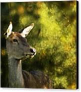 The Deer Canvas Print