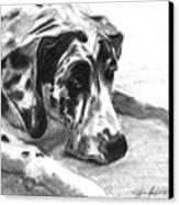 The Duke Canvas Print by J Ferwerda