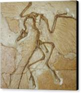 The Earliest Bird, Archaeopteryx Canvas Print by Jason Edwards