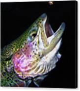 The Entomologist Canvas Print by Brian Pelkey