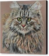 The Fluffy Feline Canvas Print by Terry Kirkland Cook