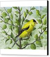 The Goldfinch Canvas Print