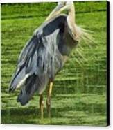 The Great Blue Heron Canvas Print by Lori Frisch
