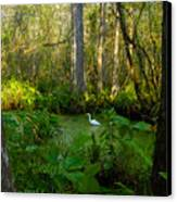 The Great Corkscrew Swamp Canvas Print