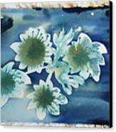 The Hopes And Dreams Of A Blossom On A Lake Canvas Print by Amy Bernays