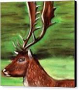 The Irish Deer Canvas Print
