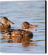 The Laughing Duck Canvas Print by Wingsdomain Art and Photography