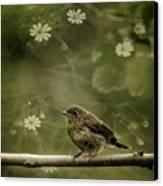 The Little Robin Canvas Print