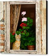 The Little Tuscan Tiger Canvas Print by Bob Nolin