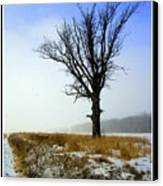 The Lone Tree Canvas Print by Trina Prenzi