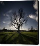 The Lonely Tree Canvas Print by Angel  Tarantella