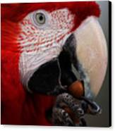 The Macaw Canvas Print