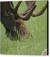 The Moose Canvas Print by Ernie Echols