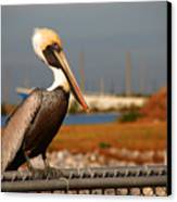 The Most Beautiful Pelican Canvas Print by Susanne Van Hulst