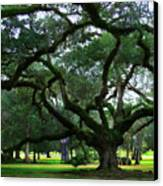 The Old Oak Canvas Print by Perry Webster