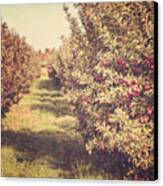 The Orchard Canvas Print by Lisa Russo