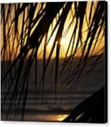 The Palm Tree In The Sunset Canvas Print by Danielle Allard