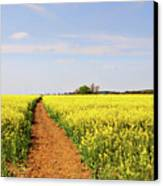 The Path To Bosworth Field Canvas Print by John Edwards