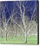 The Pecan Grove Canvas Print