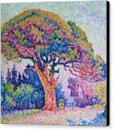 The Pine Tree At Saint Tropez Canvas Print by Paul Signac