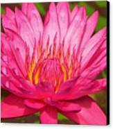 The Pinkest Of Pinks Canvas Print by Lori Frisch