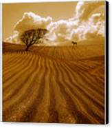 The Ploughed Field Canvas Print by Mal Bray