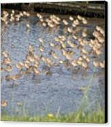 The Plovers Canvas Print