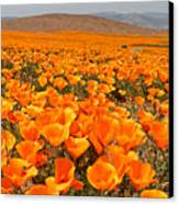 The Poppy Fields - Antelope Valley Canvas Print by Peter Tellone