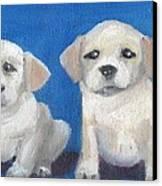 The Pups 2 Canvas Print