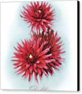 The Red Dahlia Canvas Print