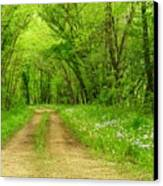 The Road Less Traveled  Canvas Print by Lori Frisch