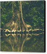 The Roots Canvas Print by Amber Dopita
