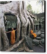 The Roots Of A Strangler Fig Creep Canvas Print by Paul Chesley