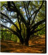 The Sacred Oak Canvas Print by David Lee Thompson