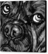 The Sad Boxer Canvas Print by Enzie Shahmiri