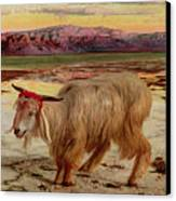 The Scapegoat Canvas Print by William Holman Hunt