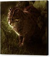 The Sleepy Wild Cat Canvas Print