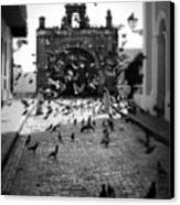 The Street Pigeons Canvas Print by Perry Webster