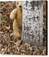 The Teddy Bear In The Woods Canvas Print