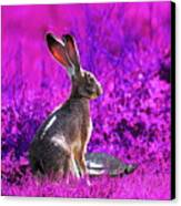 The Tortoise And The Hare . Magenta Square Canvas Print