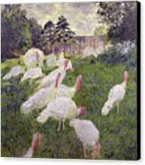 The Turkeys At The Chateau De Rottembourg Canvas Print