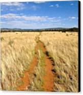 The Westward Trail Canvas Print