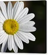 The White Daisy Canvas Print by Danielle Allard