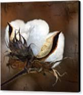 Them Cotton Bolls Canvas Print