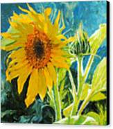 There's A New Bud In Town Canvas Print by Chris Steinken