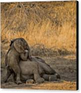 This Is Namibia No.  4 - Come On Bro I Wanna Play Canvas Print